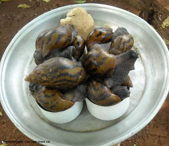 The Snail Thai Food