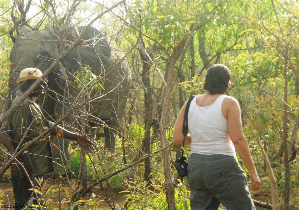 Safari Tour Ghana