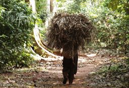 Carrying grass in Ghana